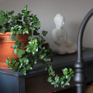Potted Plants - About Ikigai