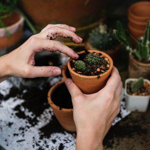 Gardening - About Ikigai